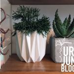 Urban Jungle Bloggers: #PLANTSHELFIE