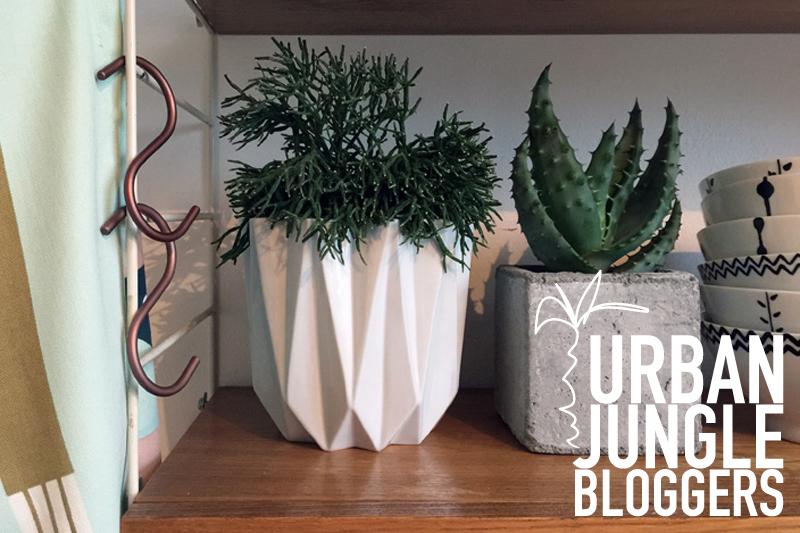 Urban Jungle Bloggers: #PLANTSHELFIE