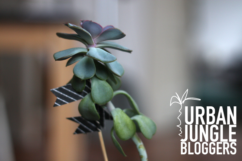 Urban Jungle Bloggers > Plants & Coffee + Pflegetipp