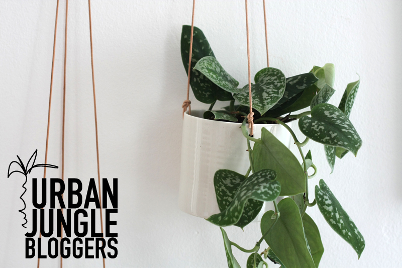 Urban Jungle Bloggers: Hängende Pflanzen + Give Away