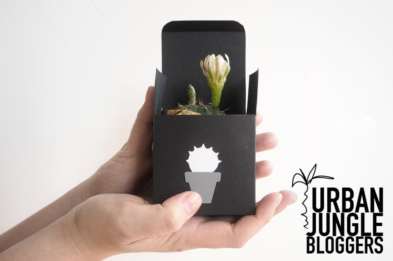 Urban Jungle Bloggers – DIY Geschenkschachteln für Pflanzen