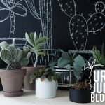 Urban Jungle Bloggers – Show your Plant Gang