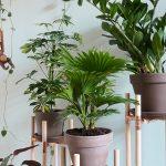 Dschungel zu Hause – DIY Pflanzenständer aus Kupfer und Holz