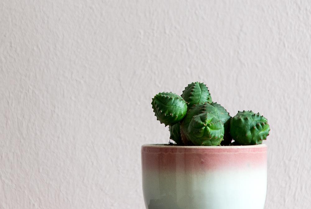 Urban Jungle Bloggers: Botanical Zoom – www.craftifair.de