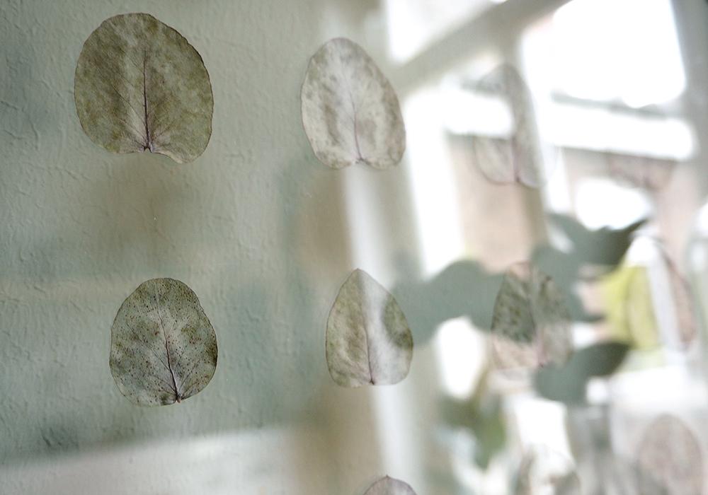 transparenter DIY Rahmen für deine Pflanzen - www.craftifair.de