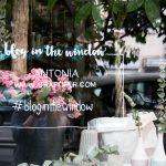 blog in the window – das Craftifair Schaufenster bei Flying Fawn