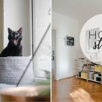 Wohnen mit Katzen – Homestory bei Saskia & Nick und ihren beiden Katzen
