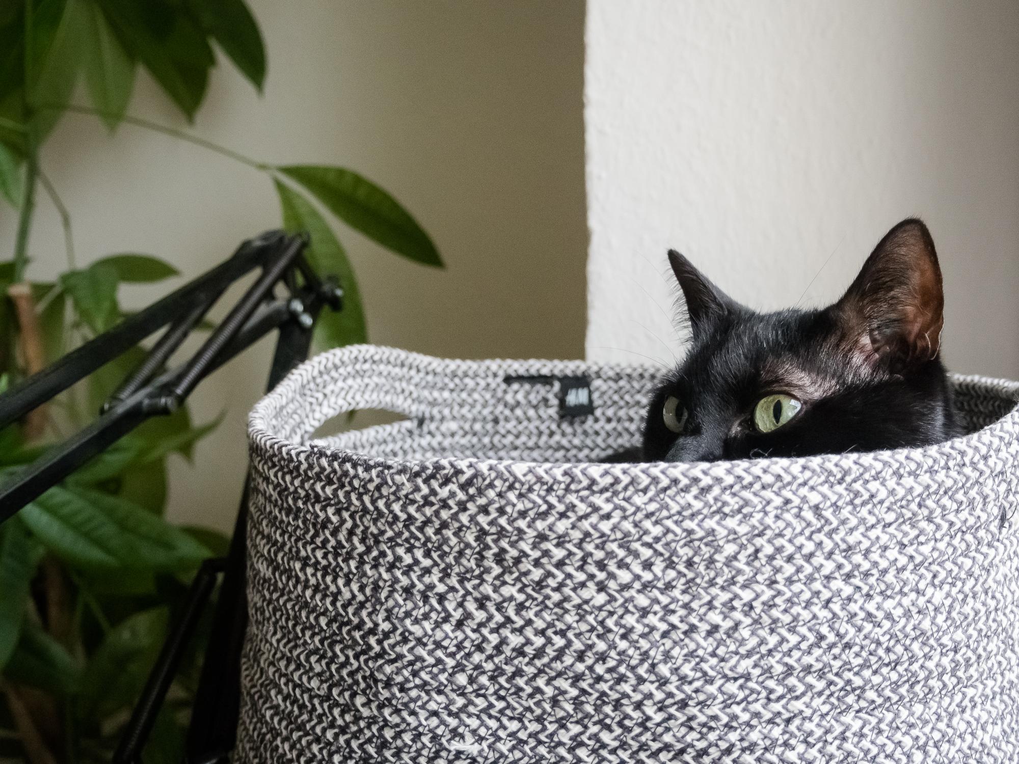 Wohnen mit Katzen - Homestory bei Saskia und Nick // www.craftifair.de