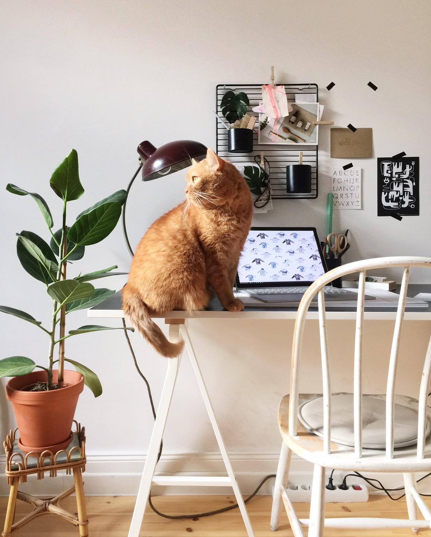 10 Dinge die ich nur für meine Katzen tue
