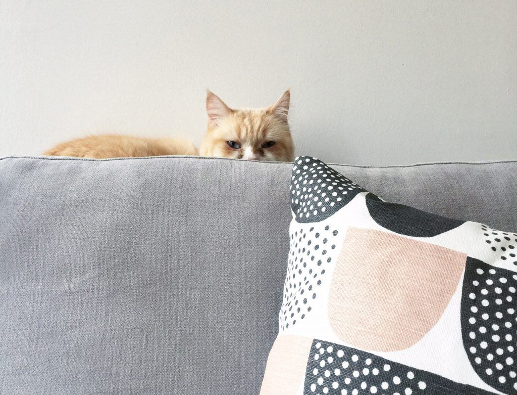 10 Dinge, die ich nur aus Liebe zu meinen Katzen tue
