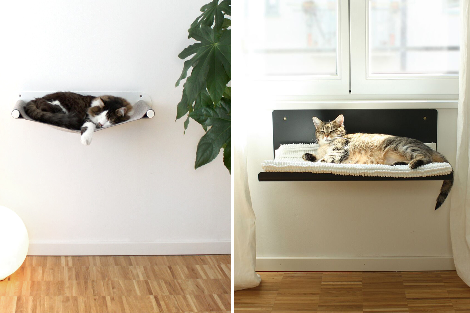 Pet Boards by Sebastian Frank