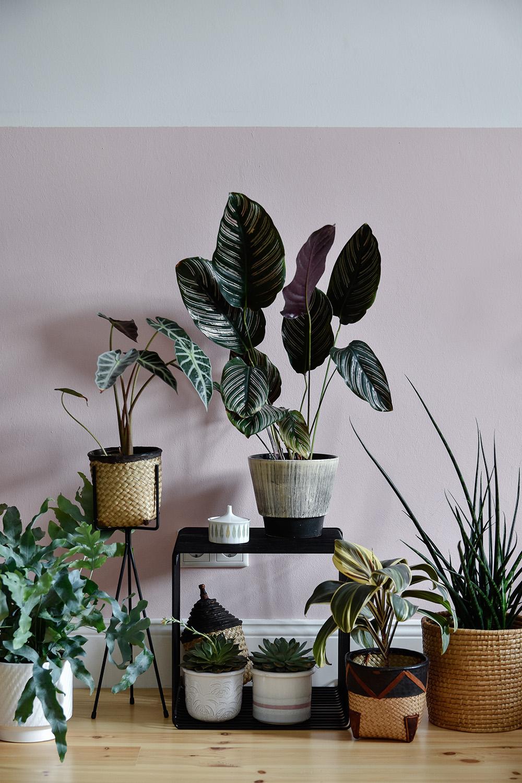 Fleamarket Finds - Urban Jungle
