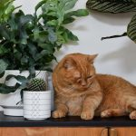 Katzen und Pflanzen in einer Wohnung – geht das überhaupt?