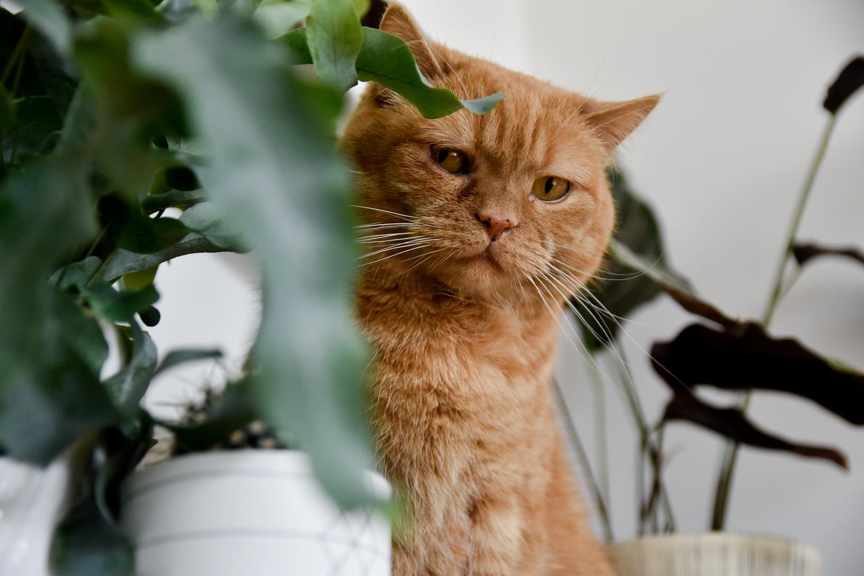 Plants & Cats - www.craftifair.com