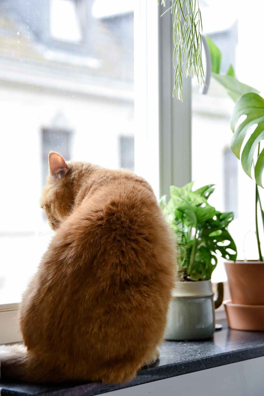 katzen und pflanzen in einer wohnung geht das berhaupt craftifair. Black Bedroom Furniture Sets. Home Design Ideas