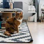Wohnen mit Katzen – Homestory bei Claudetta und ihrer Katze Tigerlily