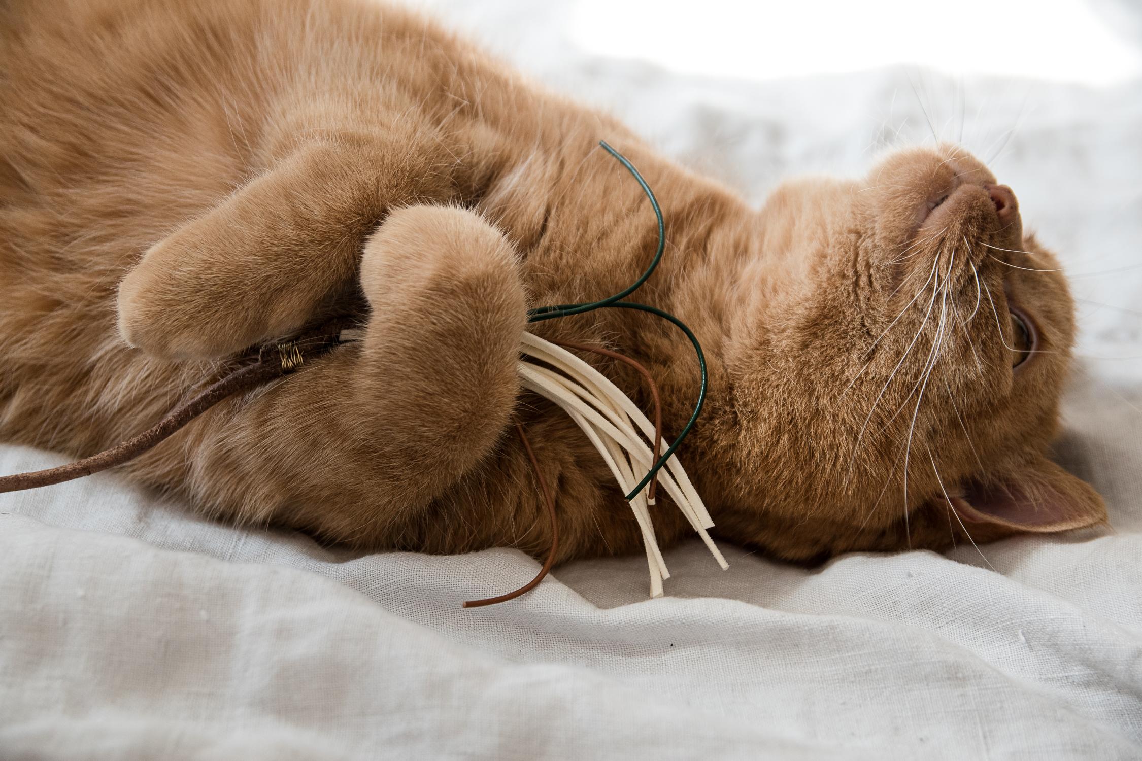Extrem Wohnen mit Katzen – schlichtes DIY Katzenspielzeug | craftifair DX23