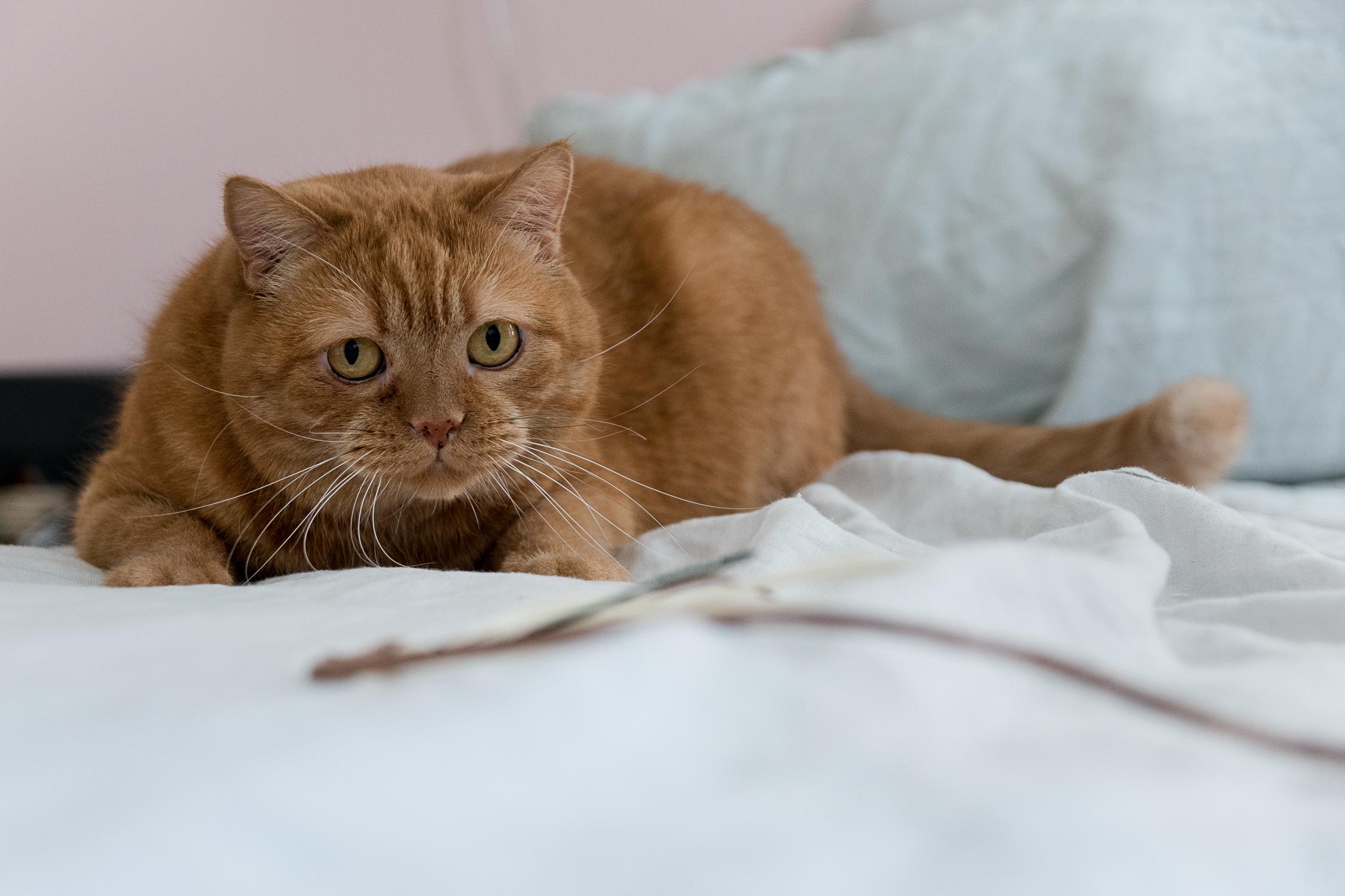 Bevorzugt Wohnen mit Katzen – schlichtes DIY Katzenspielzeug | craftifair FG58