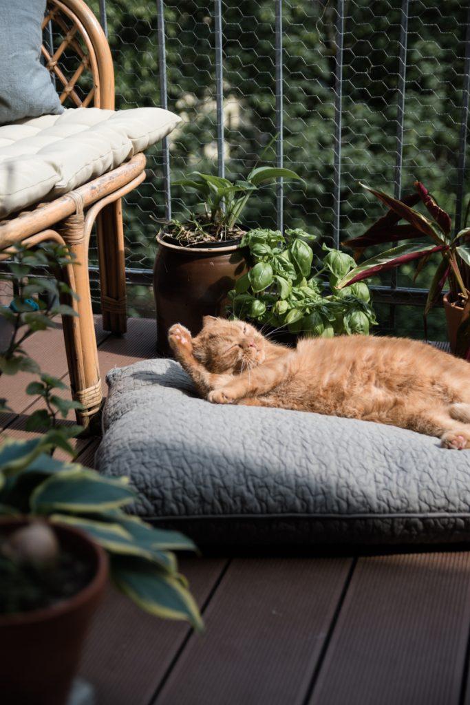 Die Lieblingsplätze von Katzen