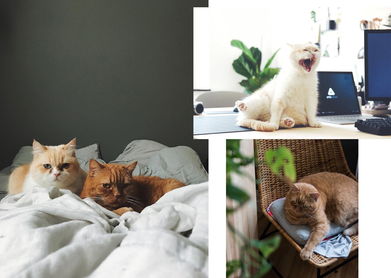 Wohnen mit Katzen – Das sind die Lieblingsplätze unserer Katzen